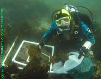 Quadrat Sampling | Census of Marine Life